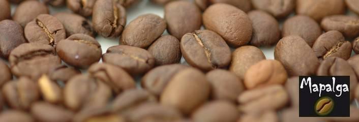 Café en grain économique