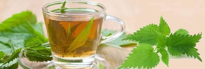 L' ORTEA, le thé à l'ortie